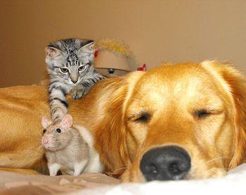 dog-cat-mouse-friends