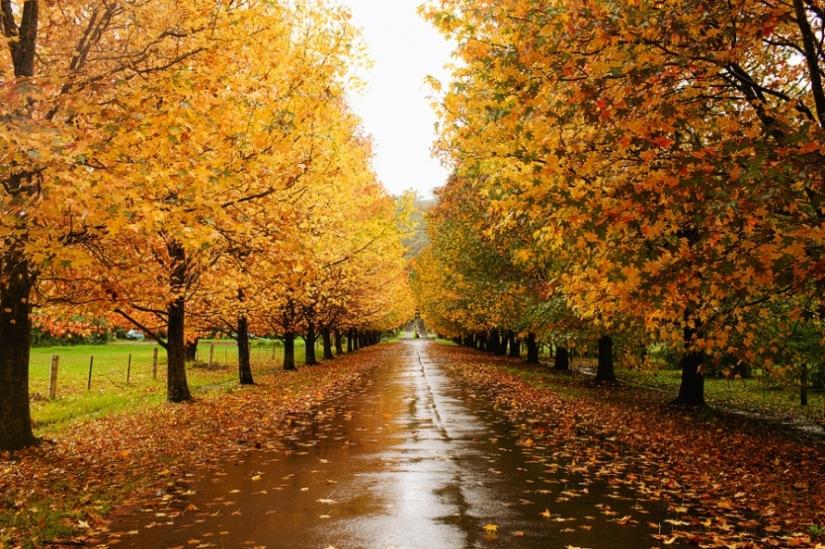 Autumn in theair