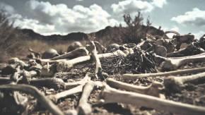 dry bones ezekial 27